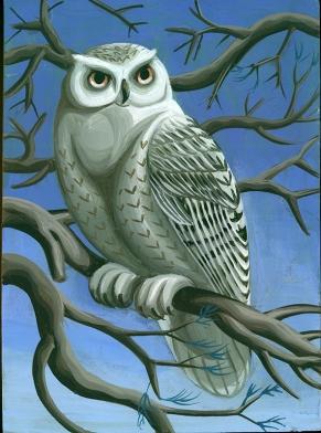 snowy-owl-hai